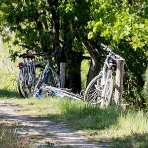 Location de vélo à le Teich ou sur le Bassin d'Arcachon