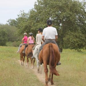 Balades à cheval en forêt ou sur les bords de leyre