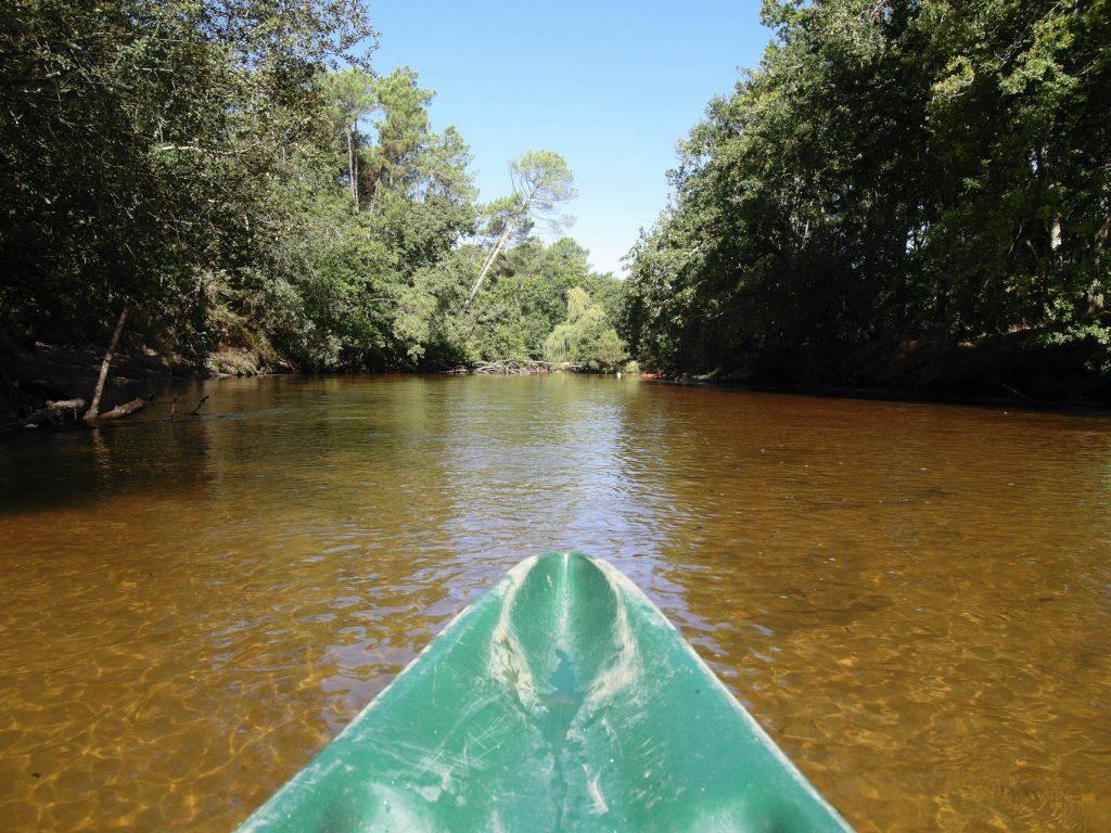 La Leyre en canoë